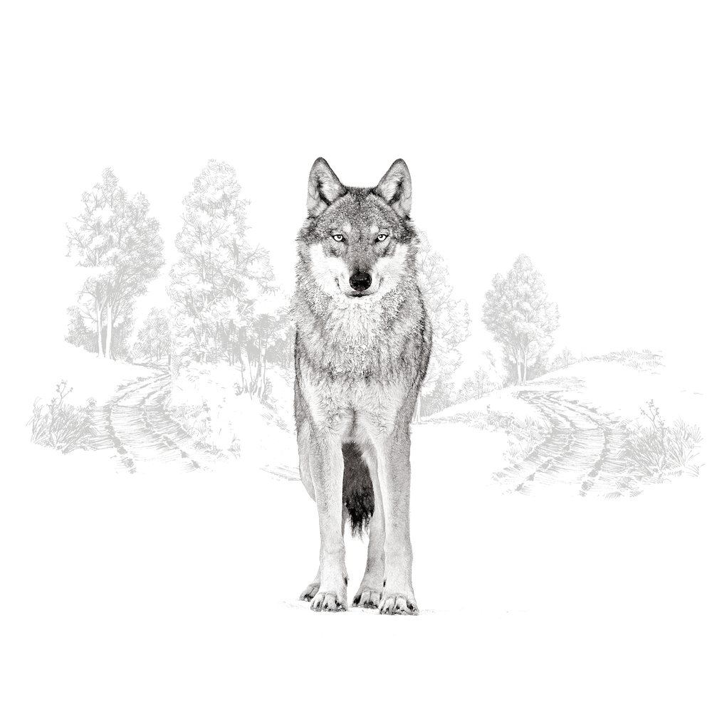 wolf and wood-01